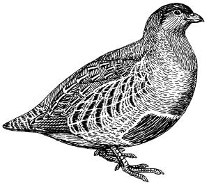 Partridge_(PSF)